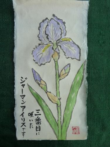 3番目に咲いたジャーマンアイリス.JPG